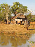 Laos-Landschaft Lizenzfreie Stockbilder