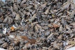 Laos: Lebende Frösche auf Pakse-Stadtmarkt, lizenzfreie stockfotografie
