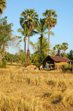 Laos - village on the Mekong Royalty Free Stock Image