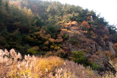 Laoshan mountains beautiful autumn scenery of Chin Stock Image