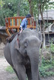 Laotisk asiatisk kvinnlig elefant Pdr Fotografering för Bildbyråer
