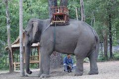 Laotisk asiatisk kvinnlig elefant Pdr Royaltyfria Foton