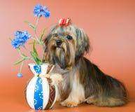 Lap-dog avec un vase images stock
