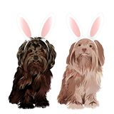 Lap dog dressed with bunny easter ears isolated on white background. Vector illustration vector illustration