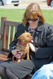 Lap dog Stock Photos