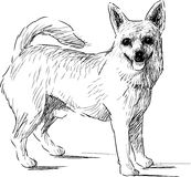 Lap dog sketch stock illustration