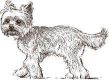 Lap dog Stock Images