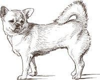 Lap dog. Vector drawing of the cute sad dog royalty free illustration
