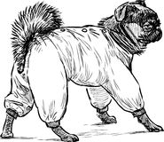 Lap dog for a walk. Vector drawing of a little dog in overalls royalty free illustration