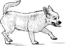 Lap dog walking. Vector sketch of a little dog at walk royalty free illustration
