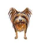 Lap-dog, Yorkshire Terrier dog .picture. Lap-dog, Yorkshire Terrier dog picture Royalty Free Stock Images