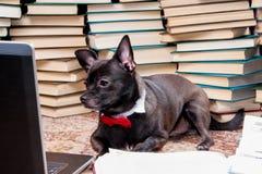 lap-top σκυλιών Στοκ Φωτογραφίες