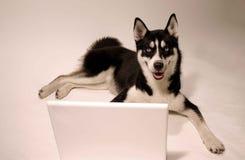 Lap top dog. Dog sitting at a lap top computer Stock Photos