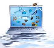 Lap top and fishes Royalty Free Stock Photo