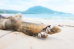 Lapa de ganso en el árbol muerto en la orilla Imagen de archivo libre de regalías