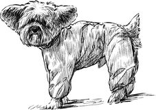 Lapdog in overalls stock illustration