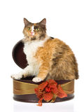 Laperm calico in gift box, on white background Stock Photography
