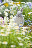 Lapin, Images stock