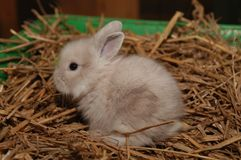 Lapin Photos stock