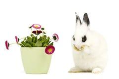 Lapin avec des fleurs image libre de droits