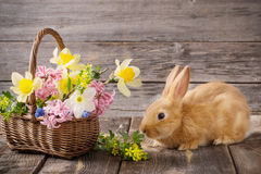 lapin avec des fleurs de ressort Photos libres de droits