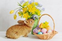 lapin avec des oeufs et des fleurs de pâques photographie stock libre de droits