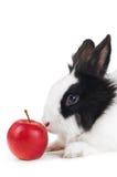 Lapin avec la pomme rouge d'isolement Photographie stock libre de droits