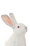 Lapin blanc photos libres de droits