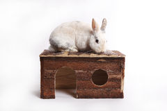 Lapin blanc avec la maison en bois Images libres de droits