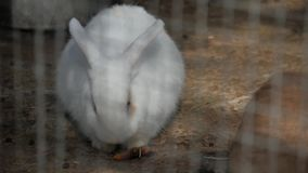 Lapin blanc dans le zoo banque de vidéos