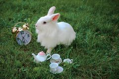 Lapin blanc de bébé drôle dans l'herbe Photo libre de droits