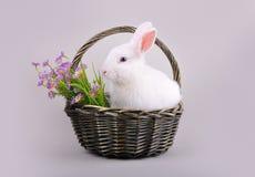 Lapin blanc pelucheux dans un panier avec des fleurs Image libre de droits