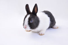 Lapin d'animal familier photographie stock