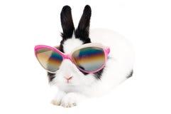 Lapin dans des lunettes de soleil Photographie stock libre de droits