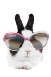 Lapin dans des lunettes de soleil d'isolement Images stock
