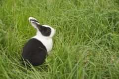Lapin dans l'herbe image stock