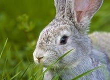 Lapin dans l'herbe photo stock