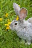 Lapin dans l'herbe images libres de droits