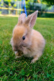 Lapin dans l'herbe Photographie stock