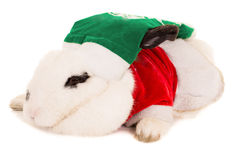 Lapin dans le chapeau de Santa Photo stock