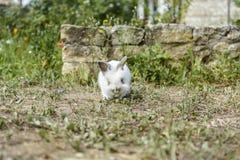 Lapin dans le jardin photos stock