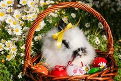 Lapin dans un panier avec des oeufs de pâques sur une pelouse avec des marguerites Photos libres de droits