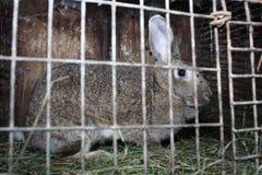 Lapin dans une cage Photos libres de droits