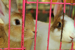 Lapin dans une cage Photo libre de droits