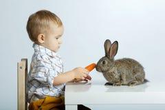 Lapin de alimentation de petit garçon avec la carotte images libres de droits