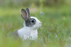 Lapin de bébé dans l'herbe image libre de droits