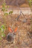 Lapin de lapin dans Jeddah, Arabie Saoudite photos libres de droits