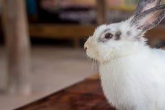 Lapin de lapin mangeant l'herbe dans le jardin Photo libre de droits
