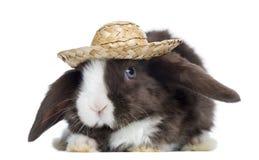 Lapin de Mini Lop de satin faisant face avec un chapeau de paille, d'isolement image stock