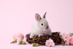 Lapin de Pâques avec des fleurs sur le fond rose Image libre de droits